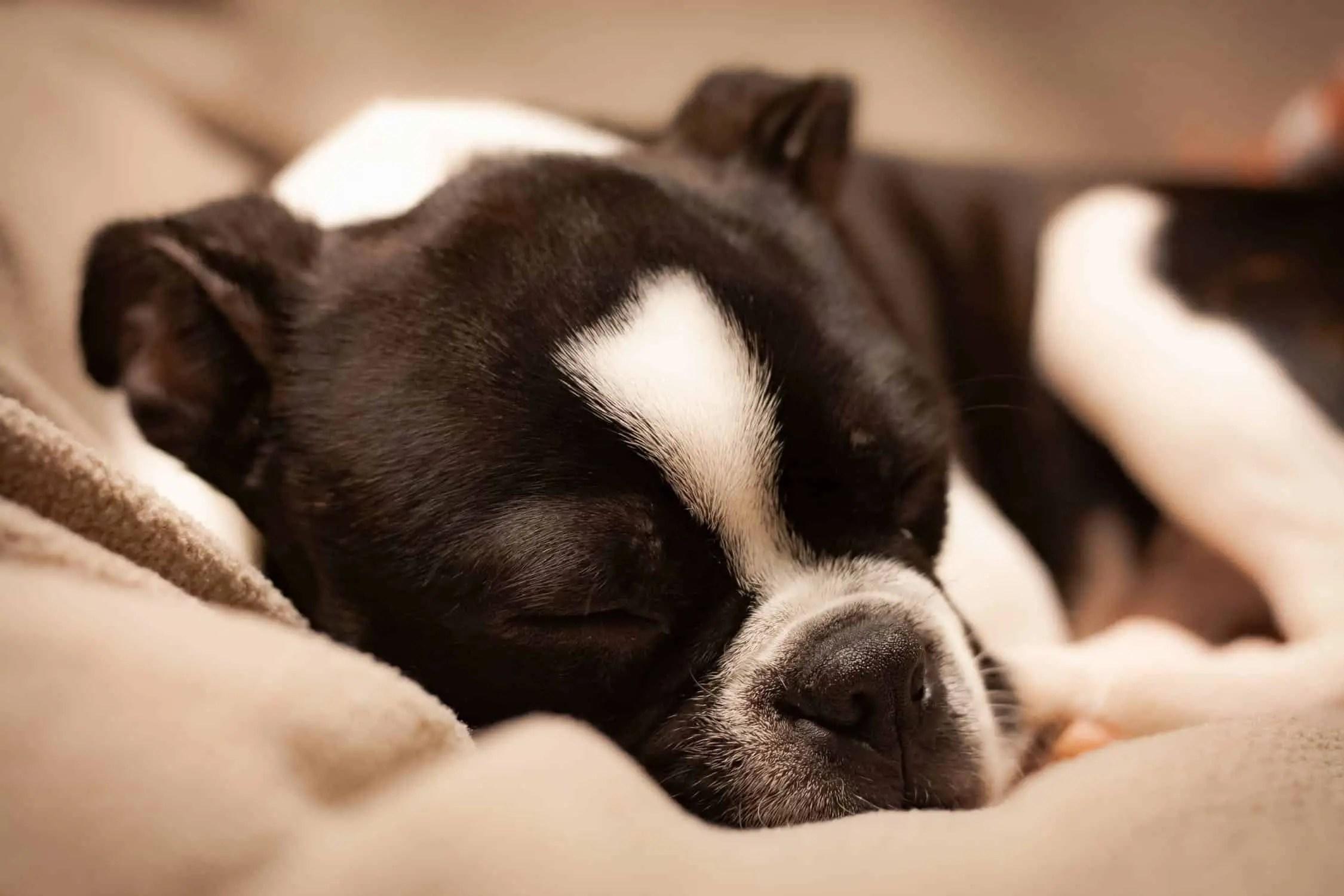 K&H Pet Products Original Pet Cot Elevated Pet Bed Review