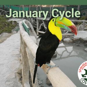 January Beginner Group
