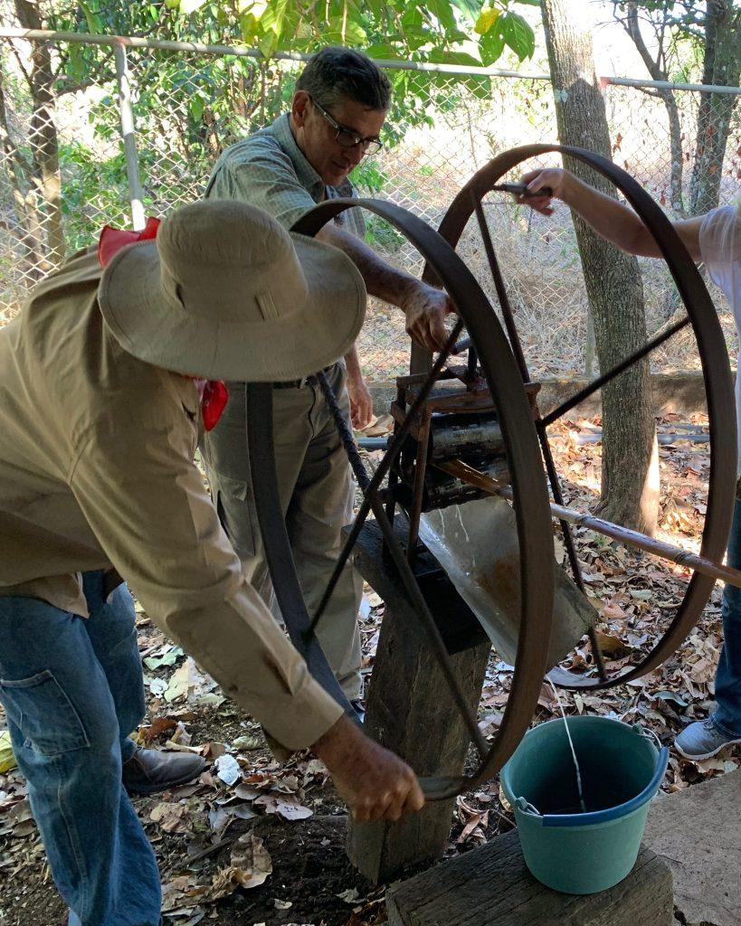 Spanish language activities - Sugar cane, coffee, and native honeybees activity - Spanish immersion program