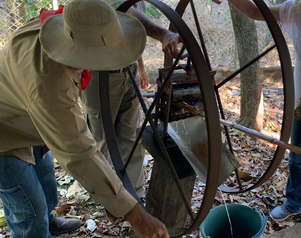 Processing sugar cane for juice _ Spanish immersion program