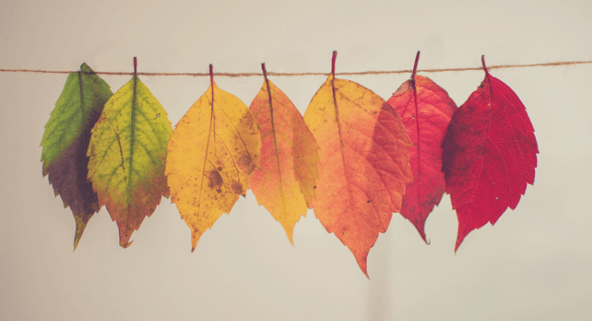 Thanksgiving in Spanish: Your Mega-Collection of Classroom Ideas