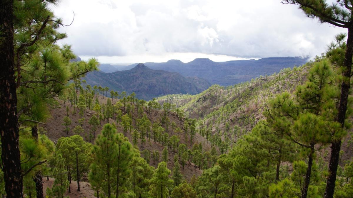 La 'guerrilla' de animales asilvestrados que amenaza los bosques canarios