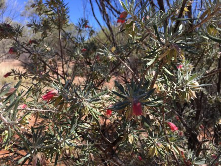 you will see plenty of desert wild flowers