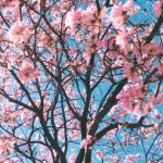 Sparsam statt spaßarm: 33 Tipps für Deinen zauberhaften Frühling