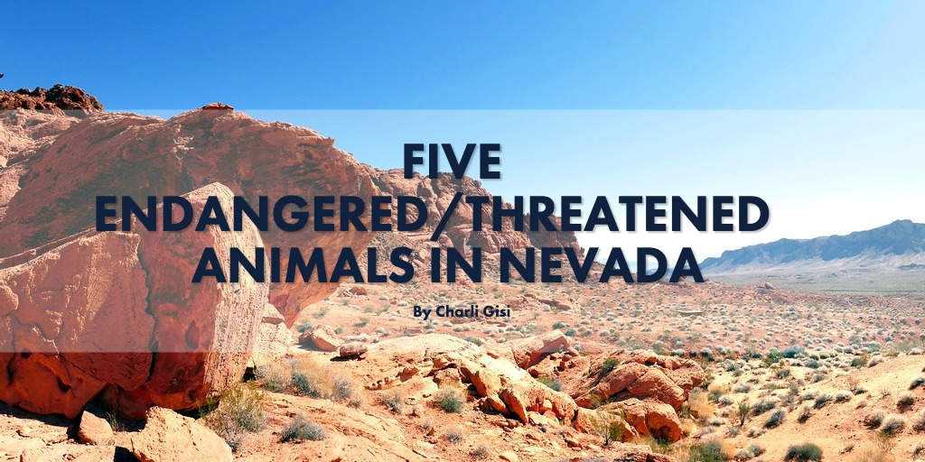 Five Endangered/Threatened animals in Nevada