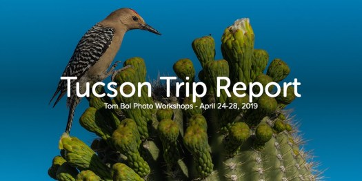 Tucson Trip Report Tom Bol Photo Workshops