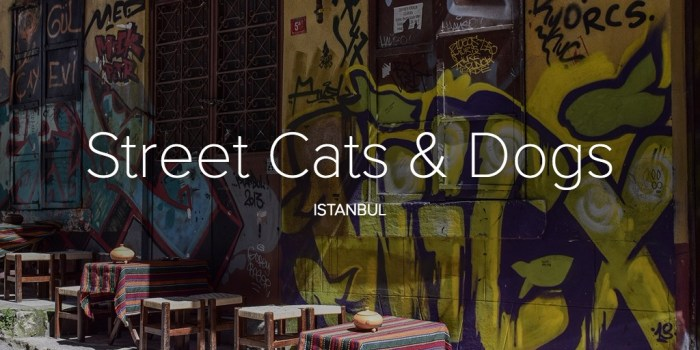 Street Cats & Dogs