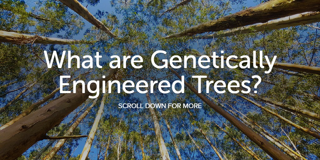 What are Genetically Engineered Trees?