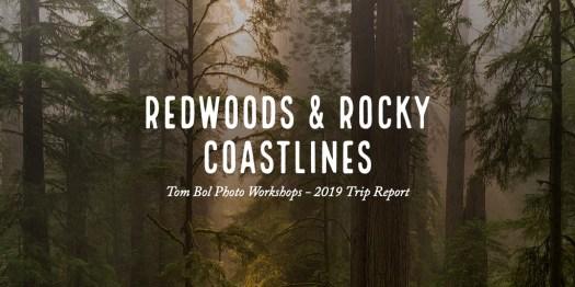 Redwoods & Rocky Coastlines