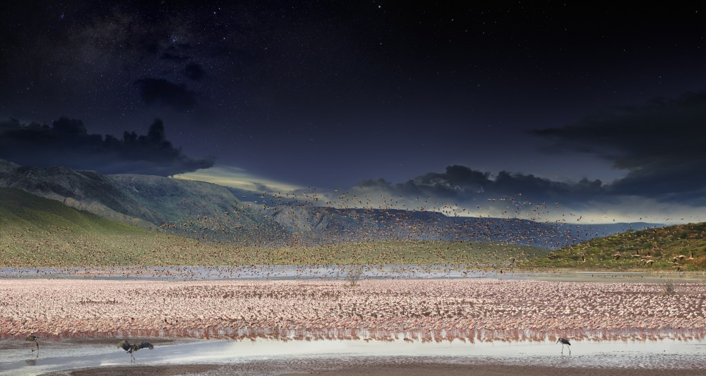 Behind this arresting image of Lesser Flamingos in Lake Bogoria, Kenya, is a story of months of research, scouting and planning. Stephen and his team built a bird blind on the edge of a temporary freshwater stream fed by the evening rains – and then waited, hopefully, for the migratory birds to come and bathe. When they finally did, Stephen stayed in the blind shooting for 36 hours. This photo appeared in National Geographic.