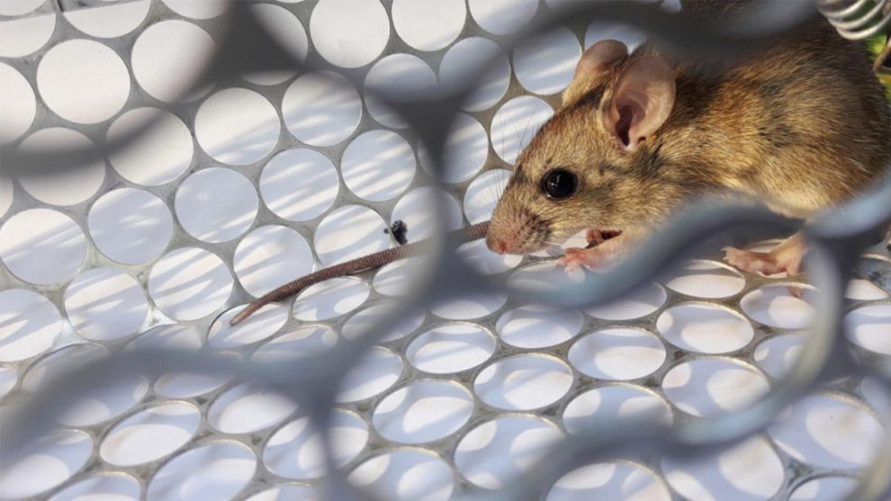 China Reported First Death by Hantavirus - Spark Health MD