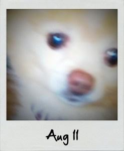 Polaroid | Aug 11