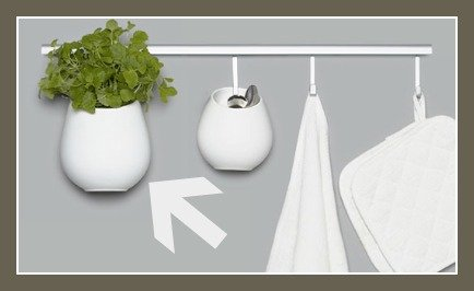 hanging plants on the wall