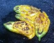 pumpkin flower pakoda