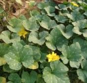 Flowers fron S's garden