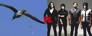 1280154890-kings_of_leon_vs_pigeon_poop
