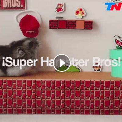 Super Hamster-io!