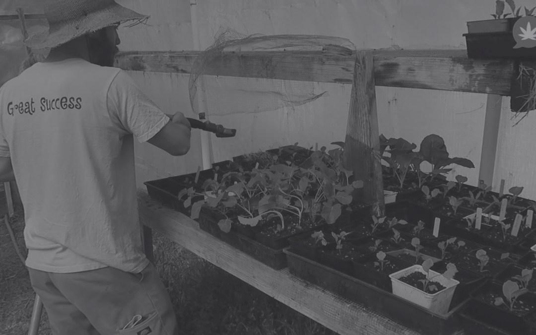 Casey O'Niell | Cannabis Farmers