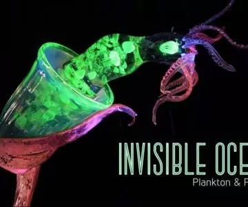 plasticplankton