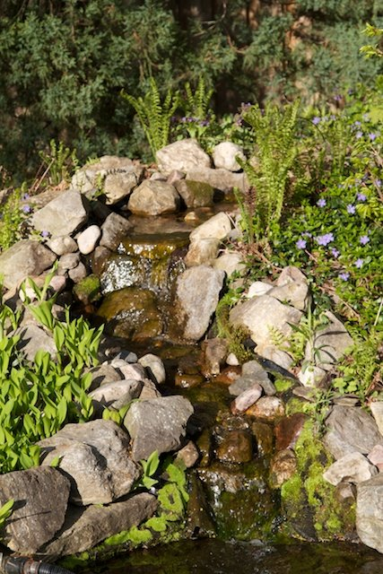 The ferns and muguet des bois start to grow around the waterfall