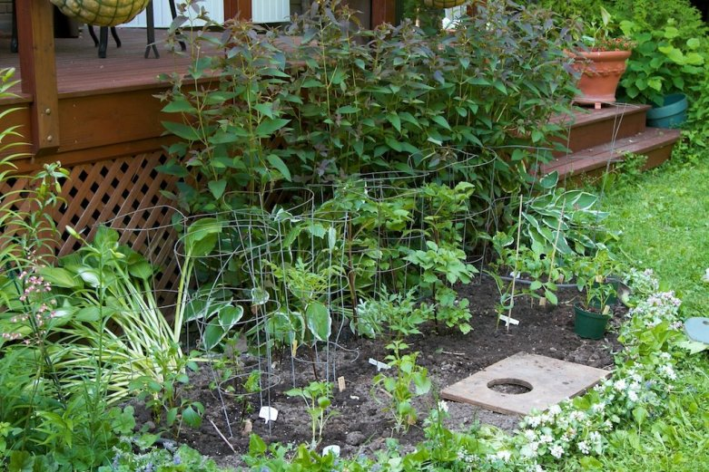 The Dahlia bed receives its first inmates