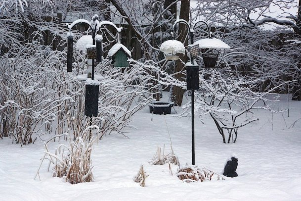 The feeder station with K'nuf-the-Crow sheltering under his snowy wig
