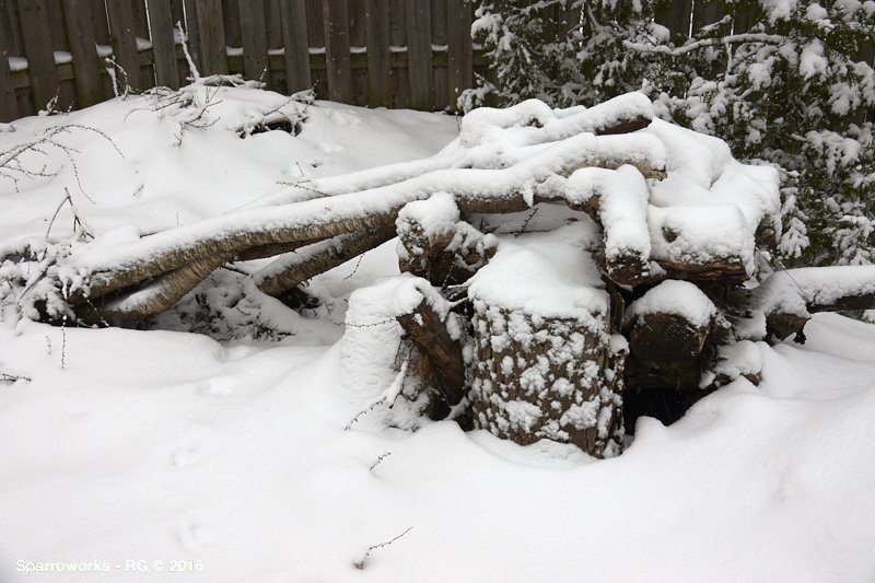The Stumpery in the snow