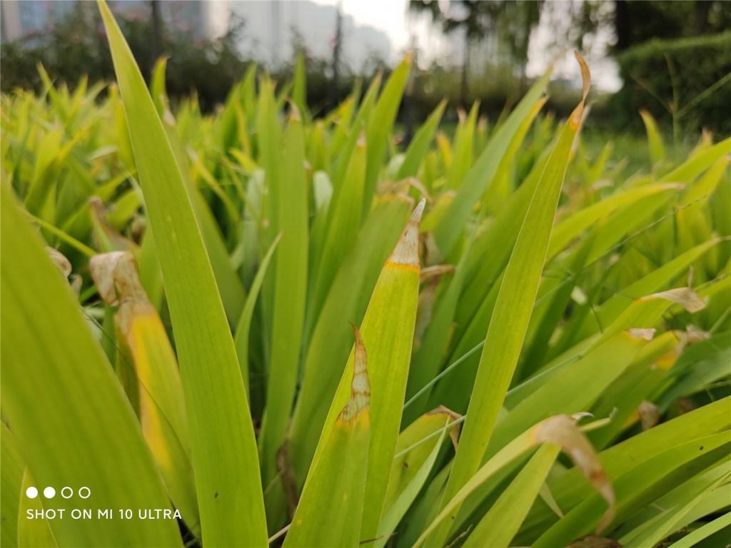 Xiaomi Mi 10 Ultra Camera Sample: Daytime proofs