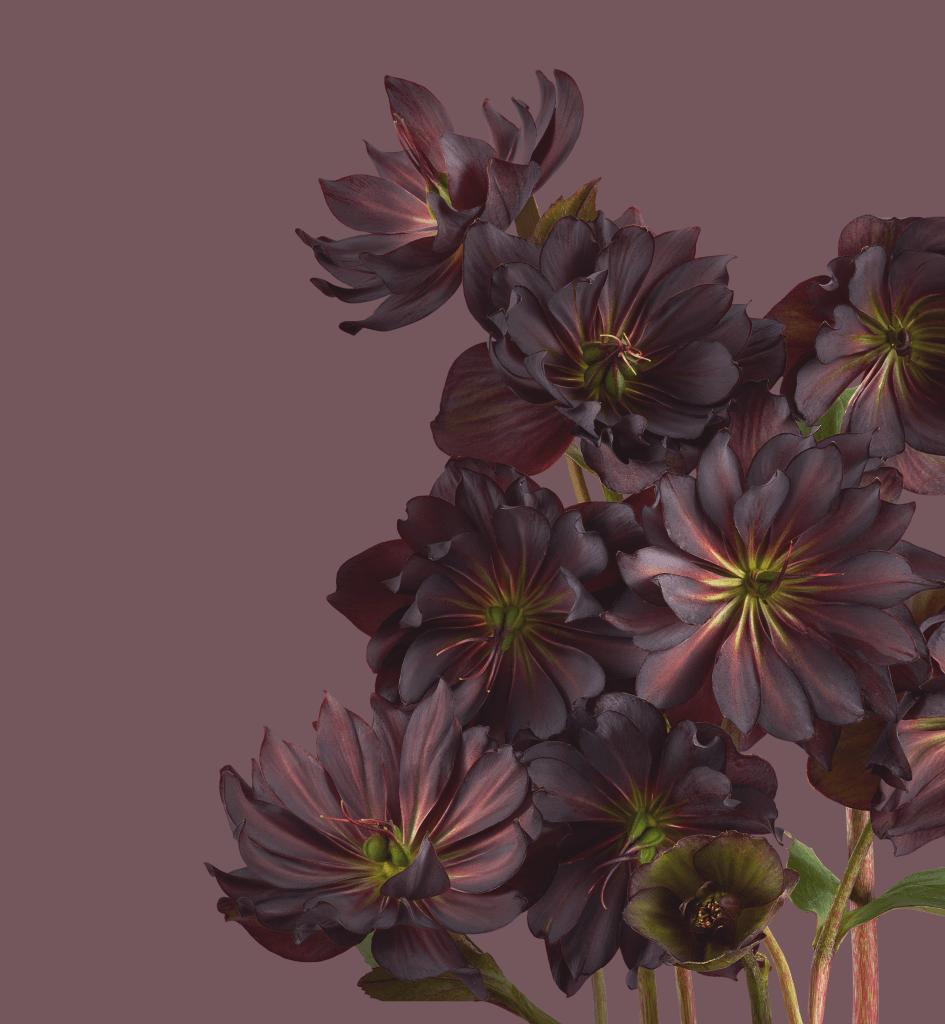 Google Pixel 6 Pro Wallpapers of Plants