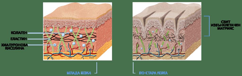матрица на дерма sparta herbs sking collagen