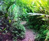 Amazon Rainforest Peru