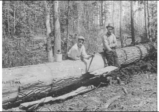 peelingbark