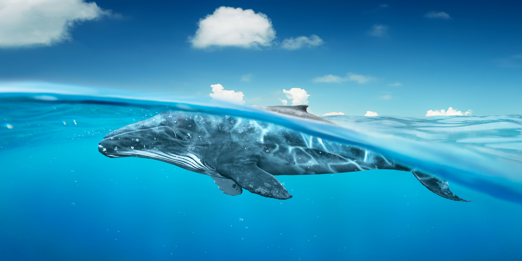 whale curve
