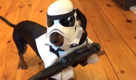 Star Wars WienerTrooper