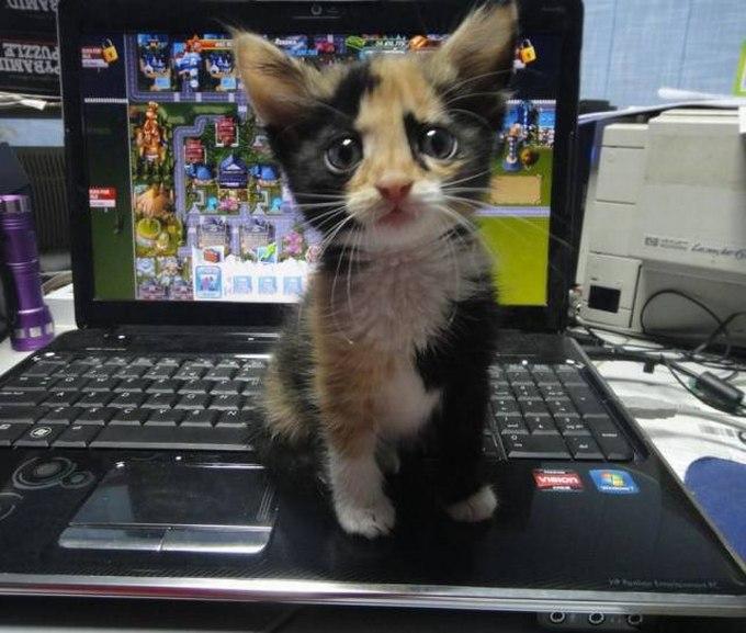 SpassPrediger.com - Picdump #015 - Lustige Bilder und coole Funpics
