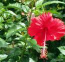 Exotic Tropical Flower