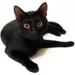 gatto-nero-sfortuna