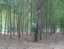 Liu Bolin, Greenbelt