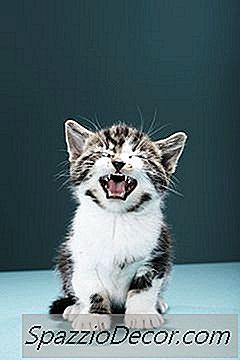 Memandikan Anak Kucing : memandikan, kucing, Terbaik, Untuk, Memandikan, Kucing