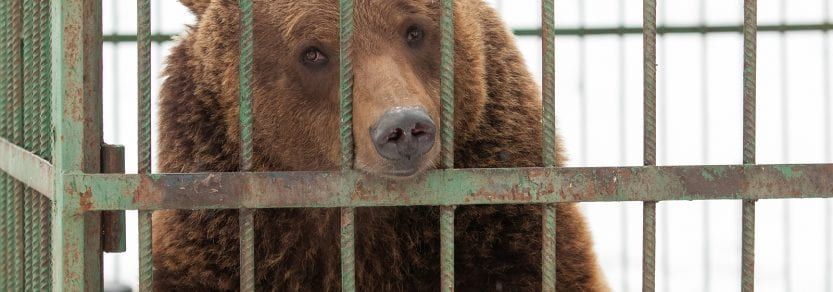 Bear Home Wild Cage