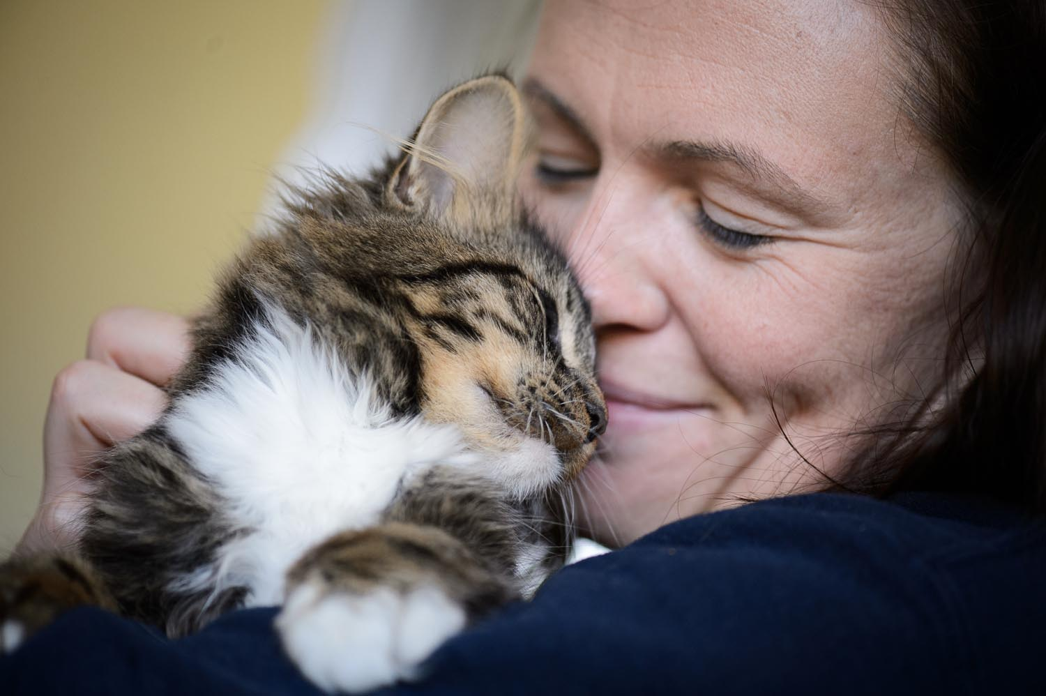 Low Cost Spay Neuter Programs For Cat Guardians