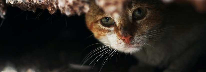 Sad lonely stray cat hiding outdoors
