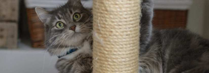 Cat using scratching post and playing