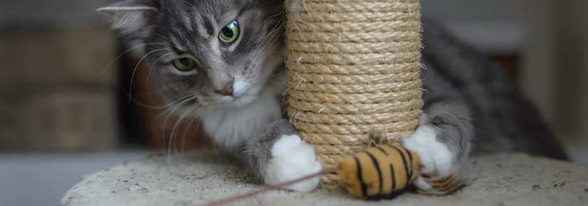 Cat using scratching post and playing with a mouse toy