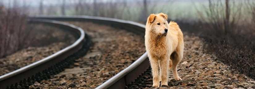 Sad lost dog