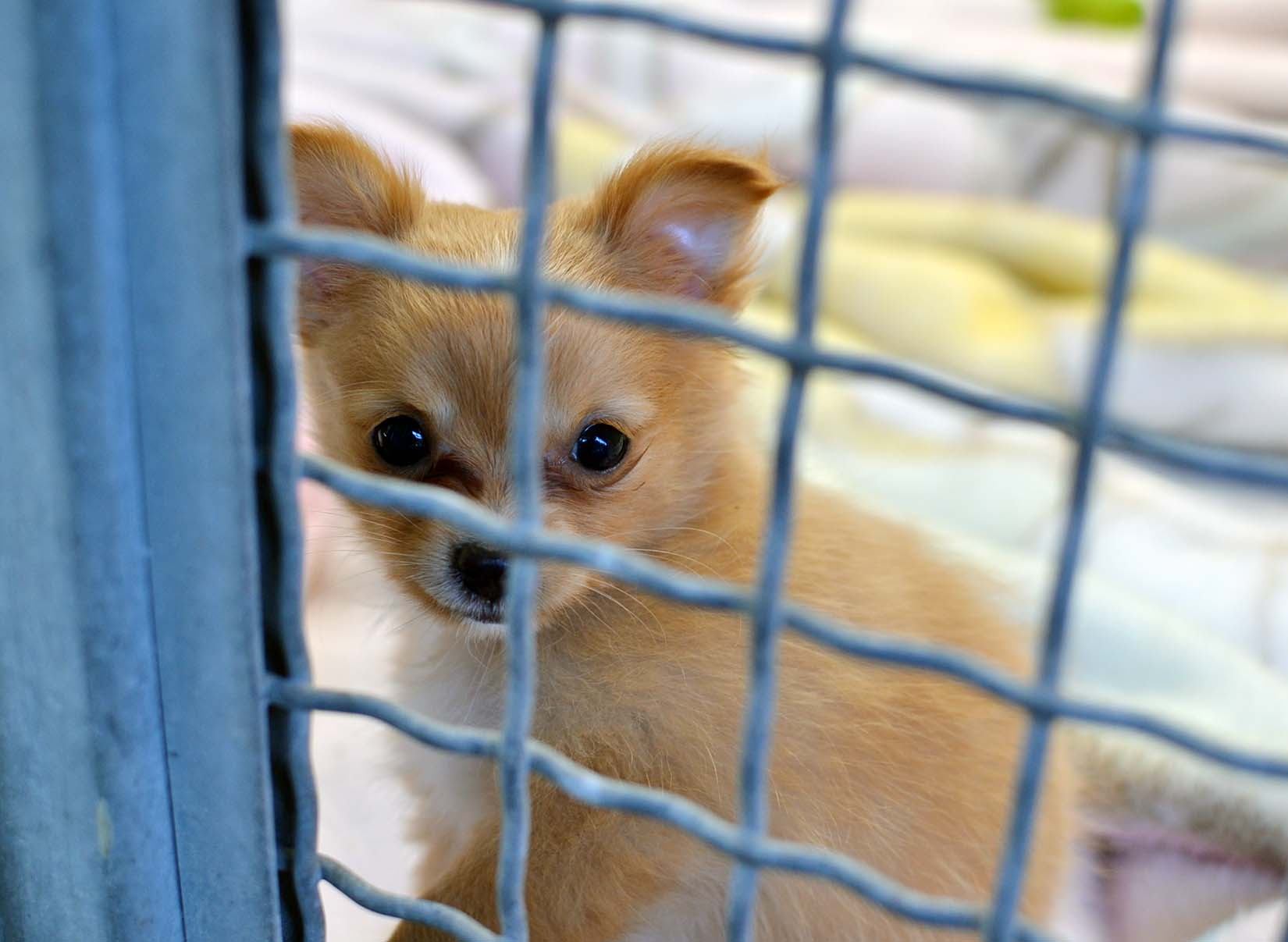 Ask Nanaimo To End The Retail Sale Of Pets Bc Spca