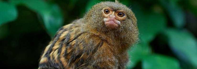 Exotic Animals Help Topics Bc Spca