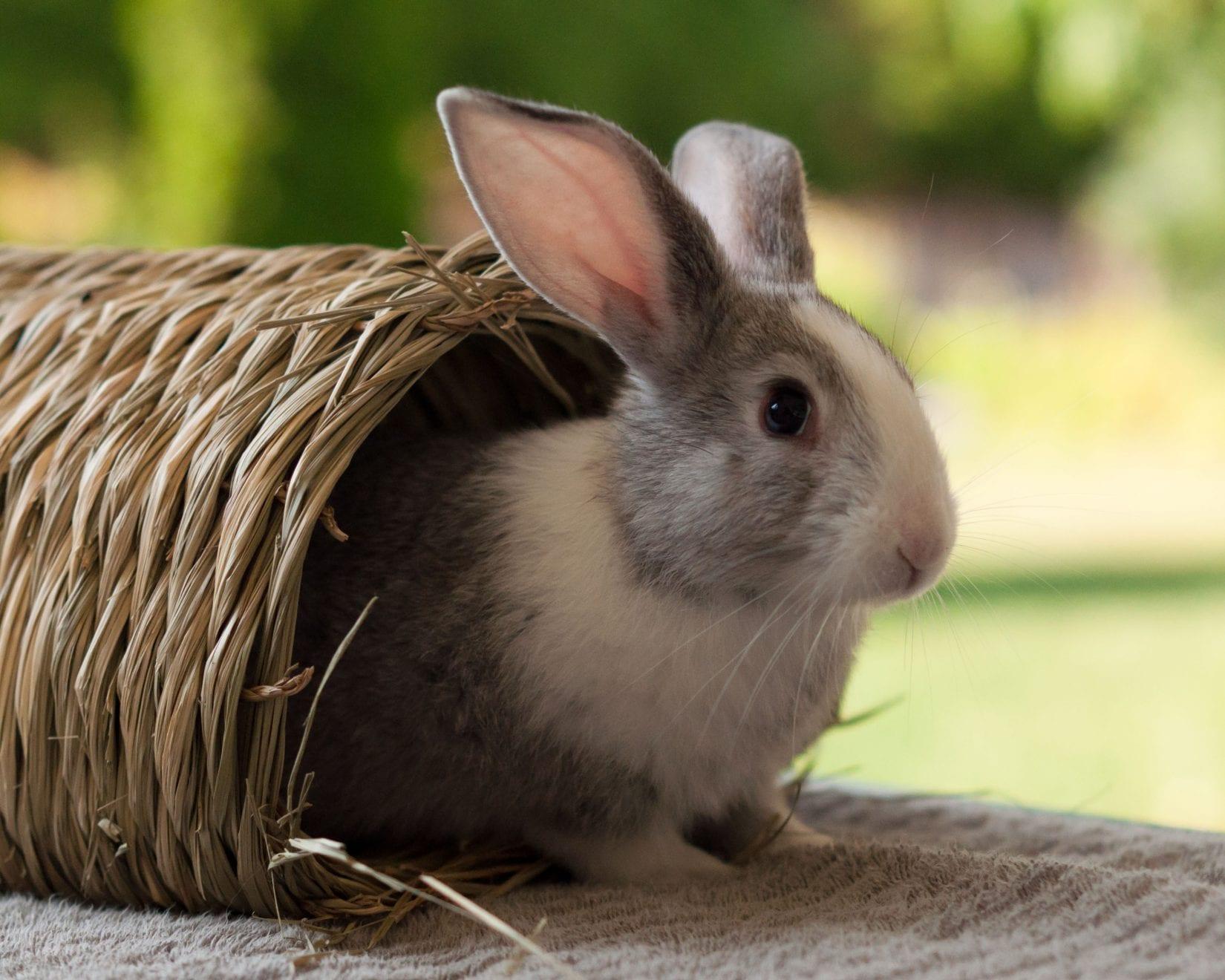 update rabbit hemorrhagic disease