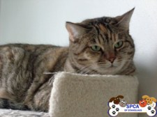 cat4_small
