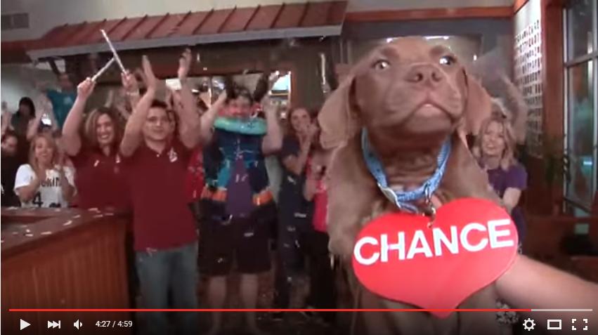 Lip Dub Video - SPCA of Wake County
